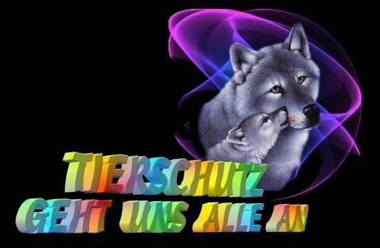 tierschutz4a