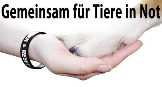 tierschutz4f